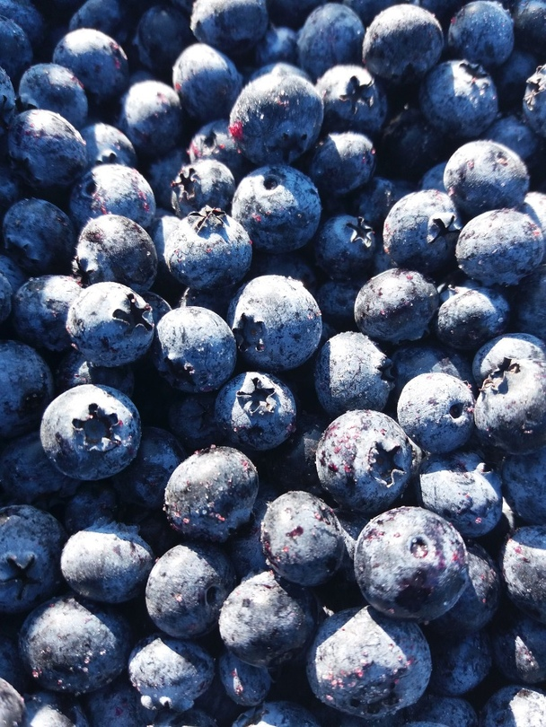 Photo 1- Blueberry